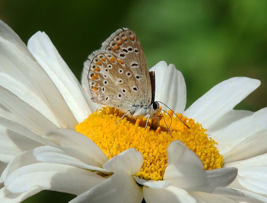 The Butterfly Garden 2