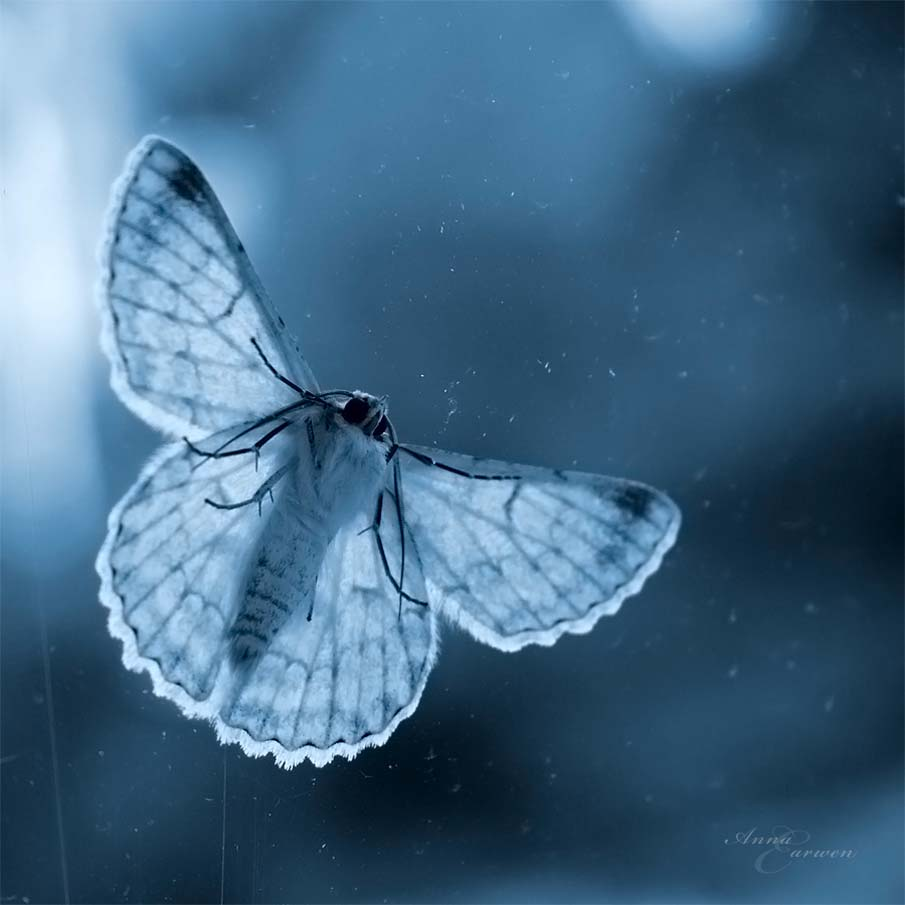 Butterfly Blues