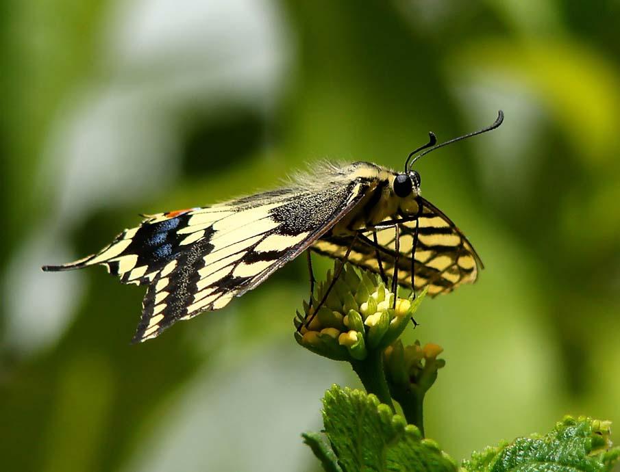 The Butterfly Garden 3