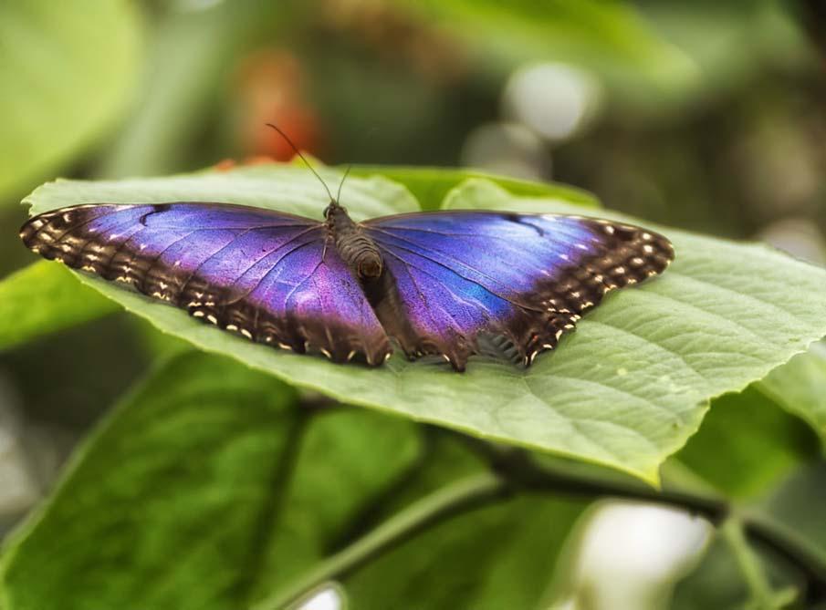 Fluttering Azure