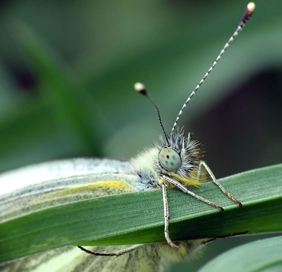 Butterfly - Motyl 3