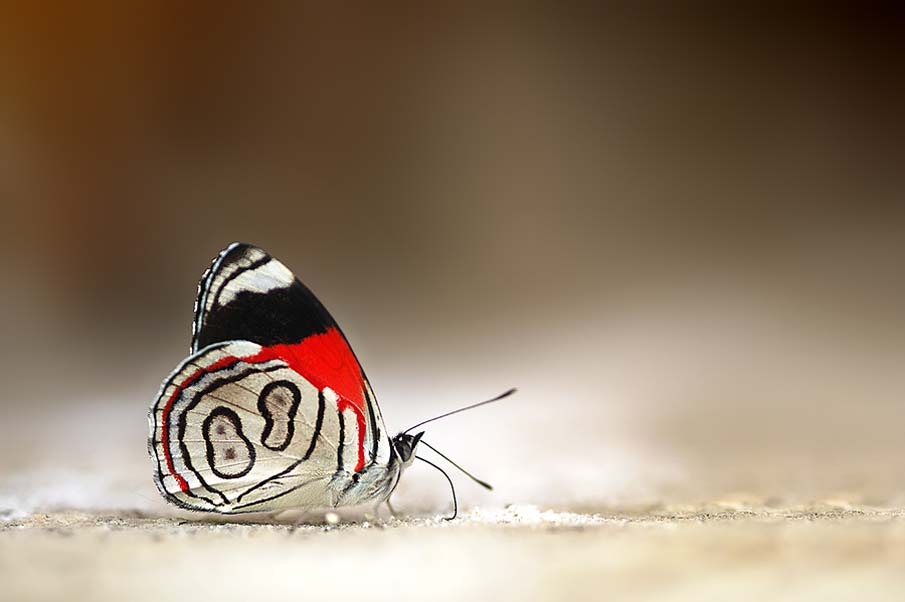 88 Butterfly