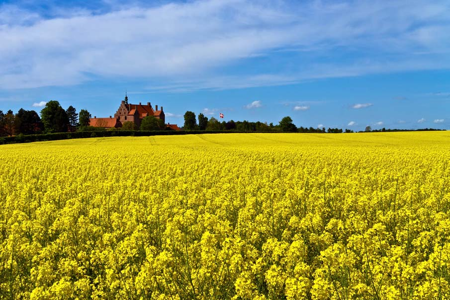 Castle Surrounded by Canola Fields
