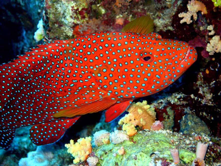 The red sea for Exotic tropical fish