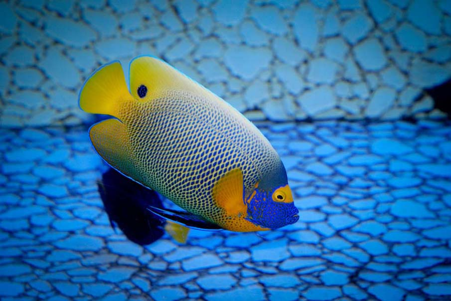 50 Photos Of Colorful Exotic Fish From The Depths Of The