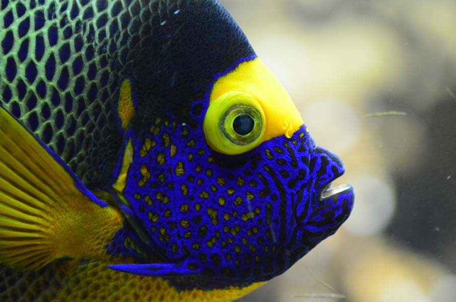 Tropical fish profile for Exotic tropical fish