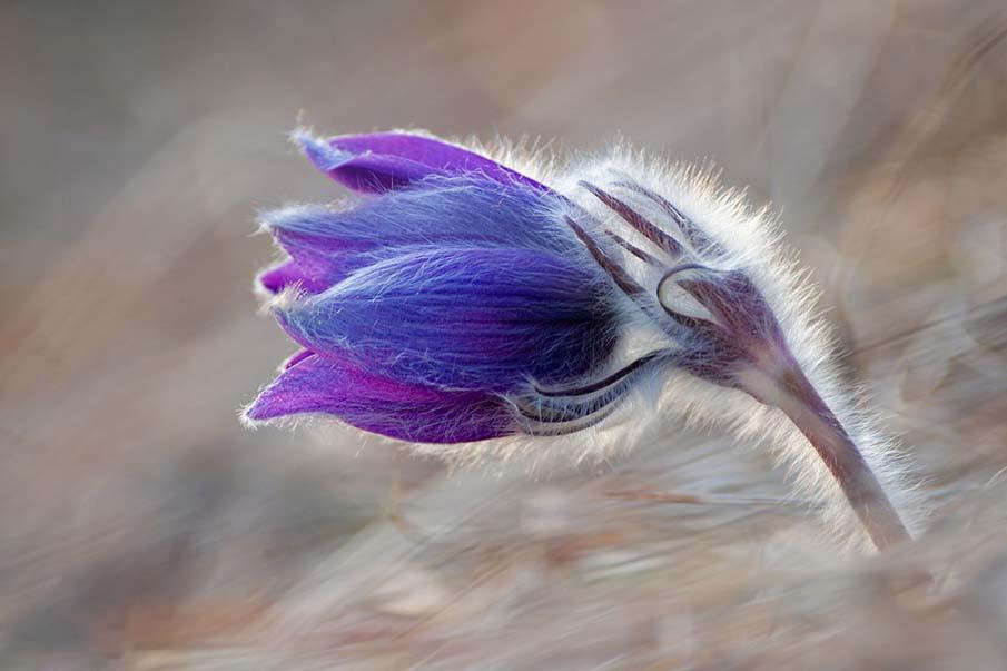 Floret Blue
