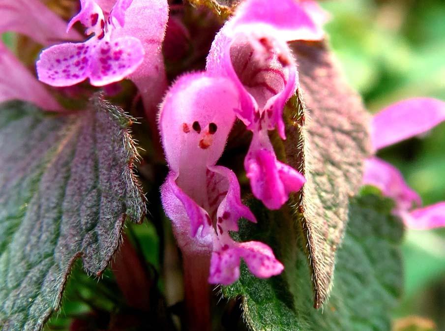 Flower Smiling