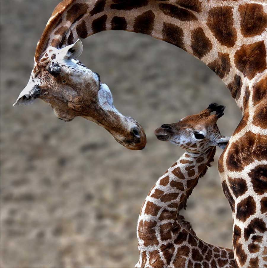 A Mother Love