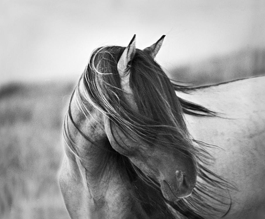 Beautiful Black And White Horse Photography