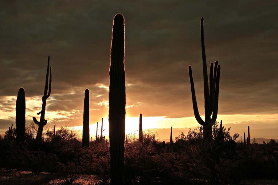 Dreamed Beneath a Desert Sky