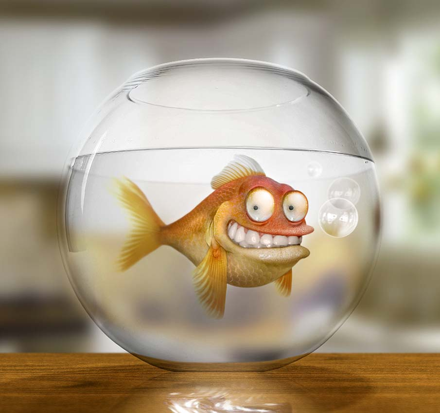 Klaus the German Goldfish