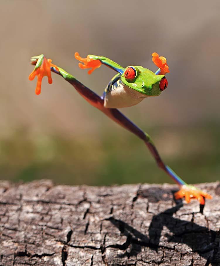 Kungfu Frog