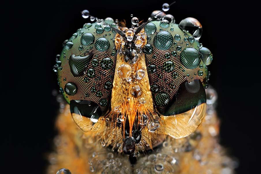 Dew on Me 1