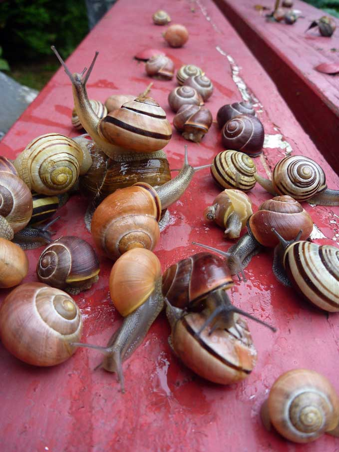 Lots of Snails