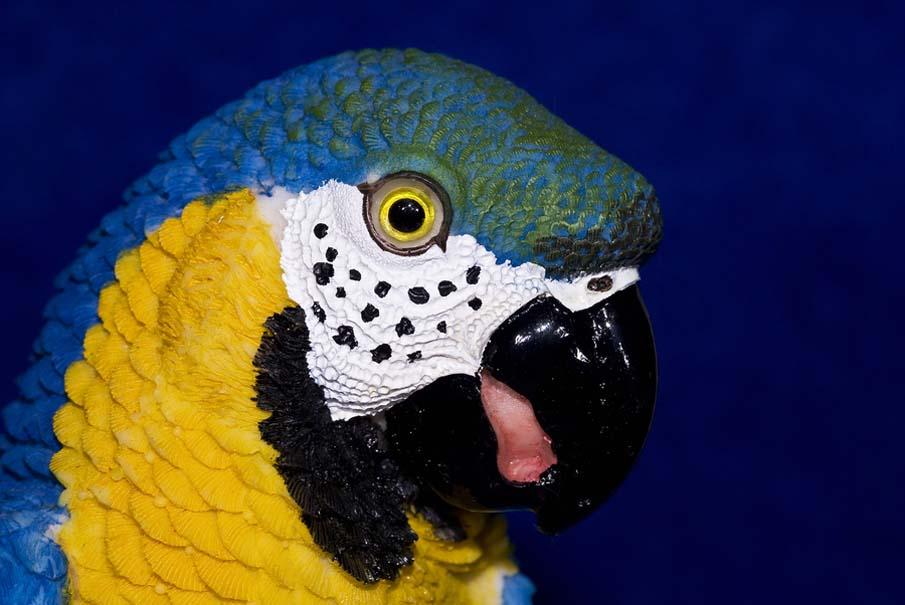 Macro Macaw