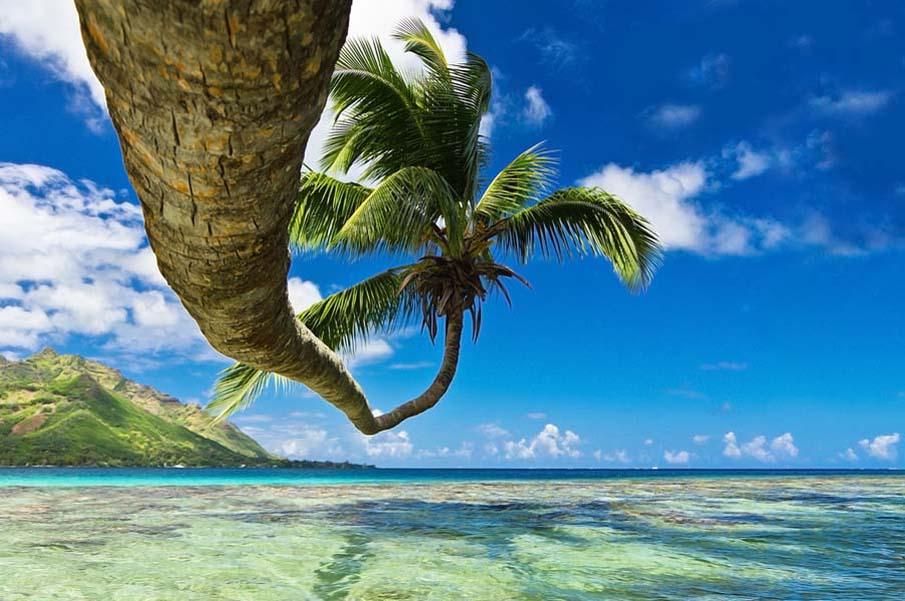 Lazy Coco Tree
