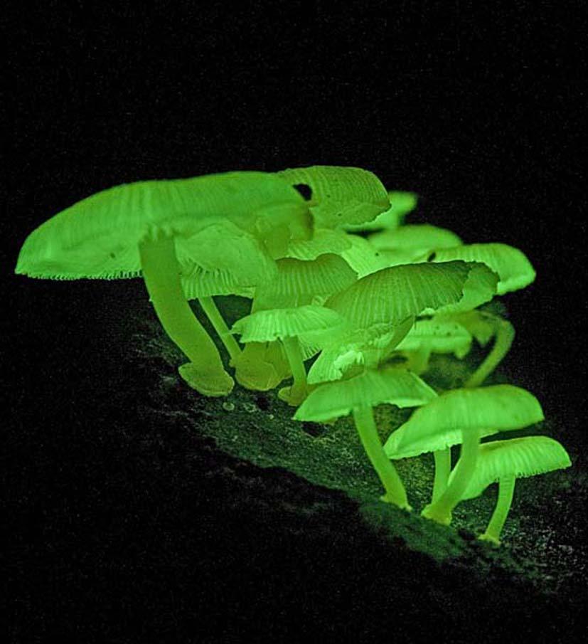 Fungi Glow