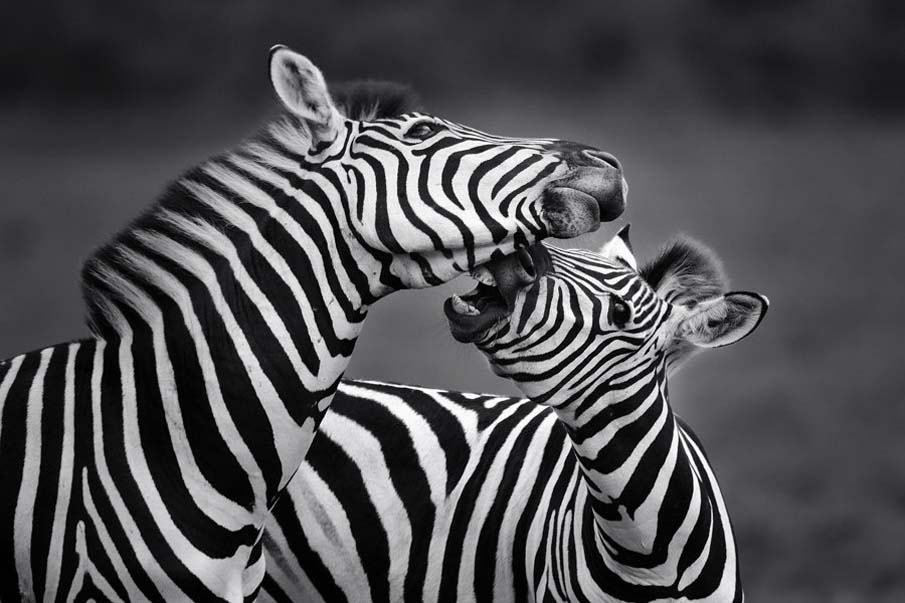 Zebra Cross-ings
