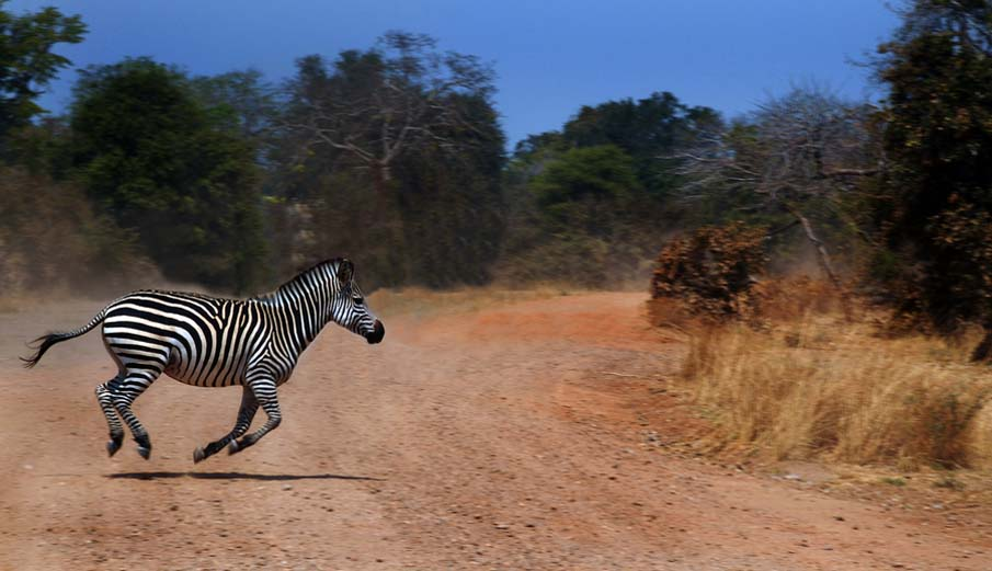 A Zebra Crossing…