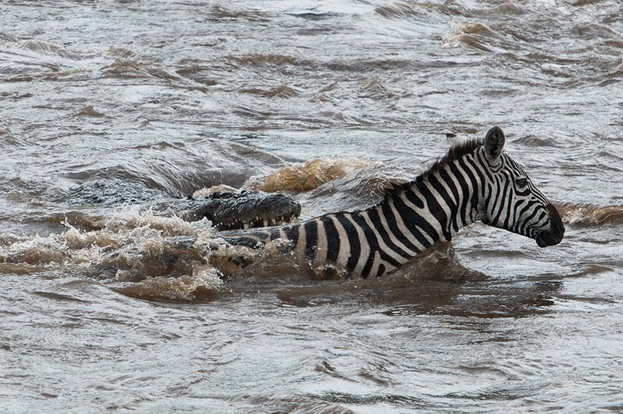 Mara River Crossing, Kenya.