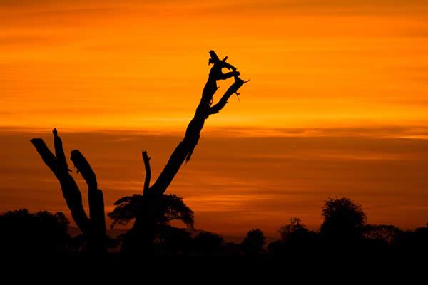 Sunrise at Masai Mara, Kenya, Africa