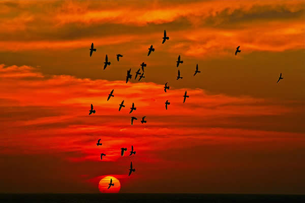 Birds Flying in Paradise