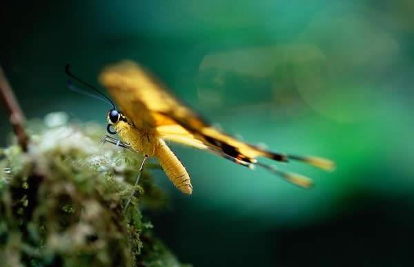 A Giant Swallowtail