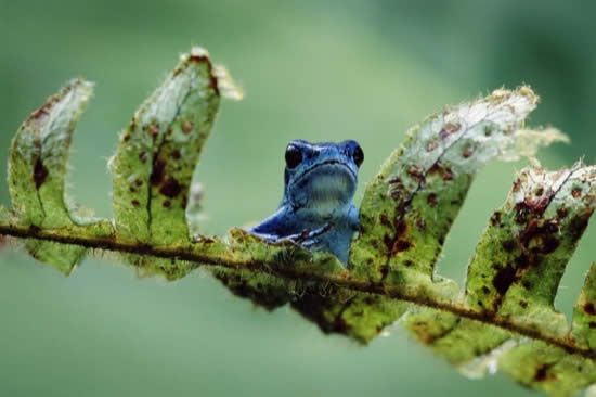 Unique Picture of Blue Frog
