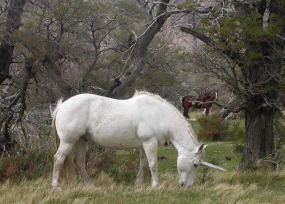Patagonian Unicorn