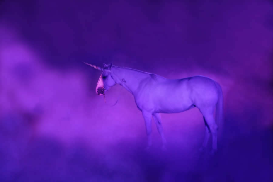 The Purple Unicorn