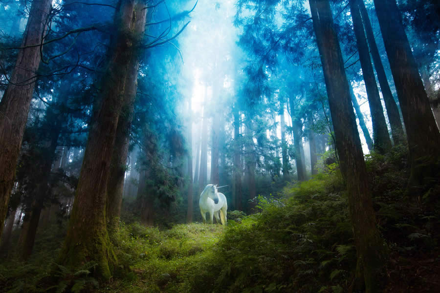 Deep Forest Unicorn