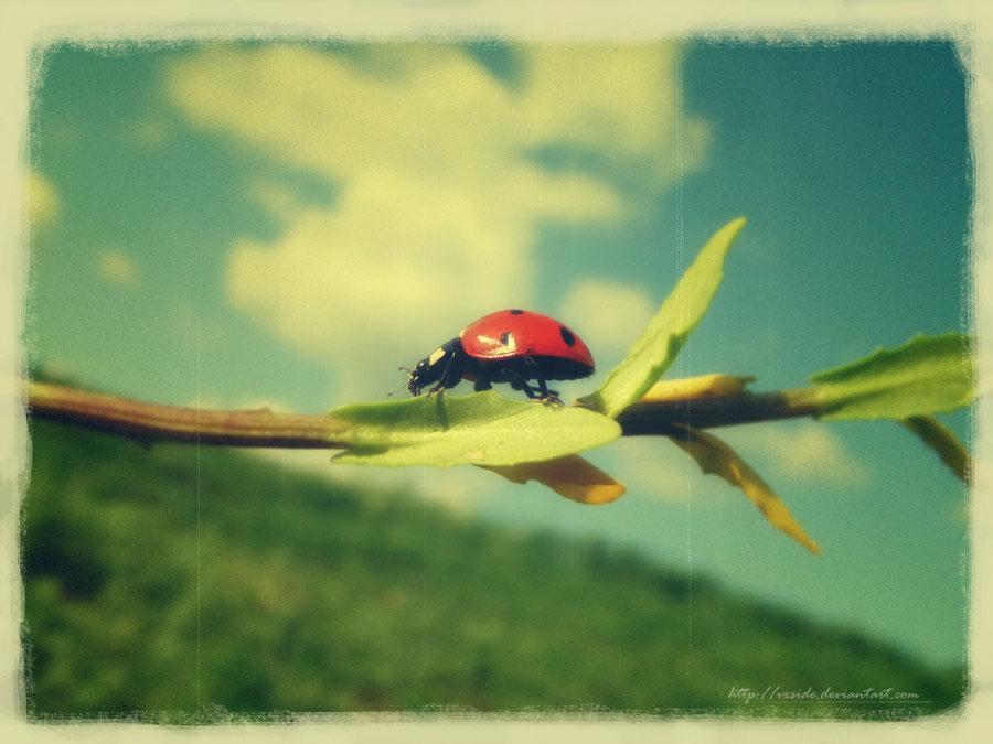 Ladybug - Vintage