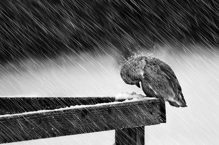 Heavy Winter
