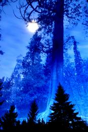 BluTrees