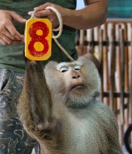 Number 8.