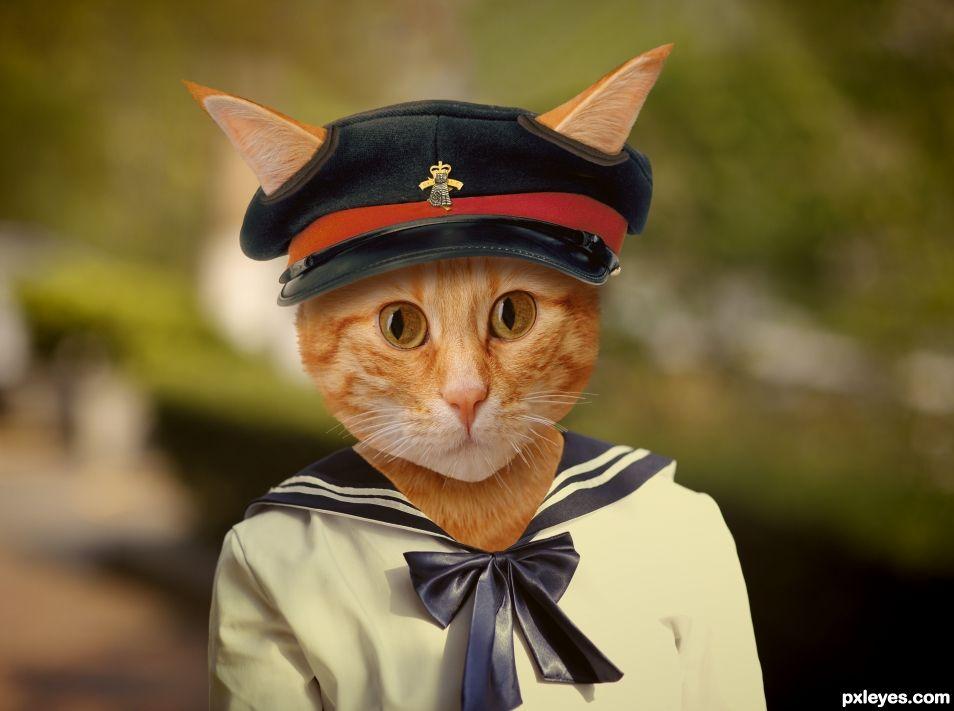 Young cat cadet