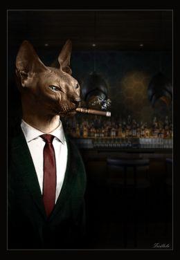 sphynx bartender