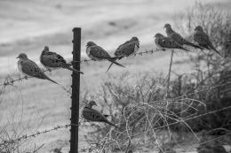 Gathering of Dove