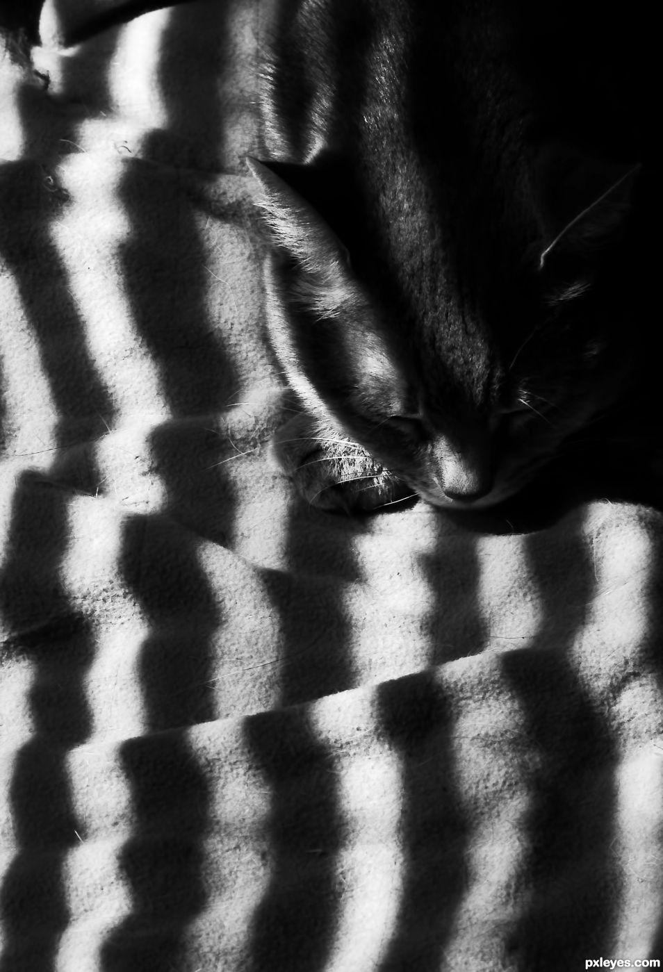 Striped Sleep