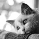 BW cats photography contest