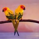 Birds 5 photography contest