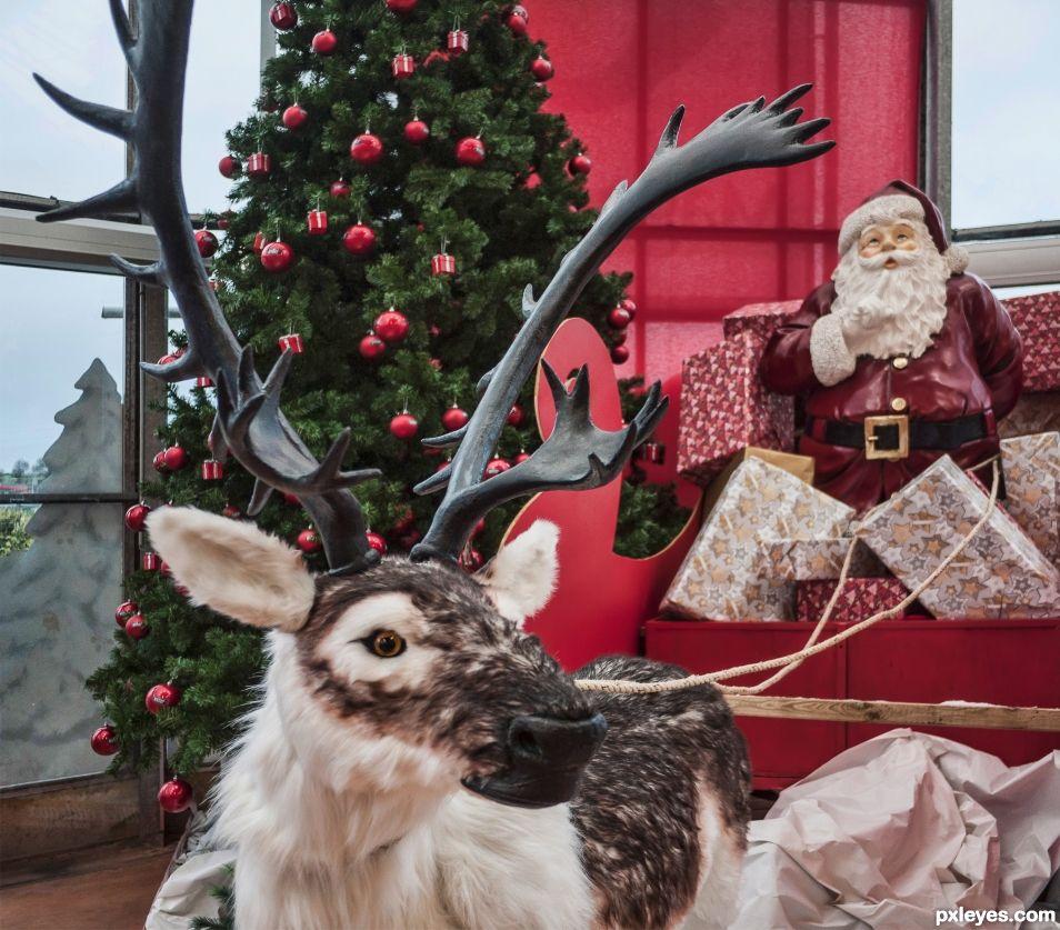 A long way home, Rudolph!