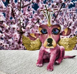 The Pink Flower Dragon