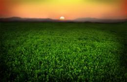 hdr off sunrise