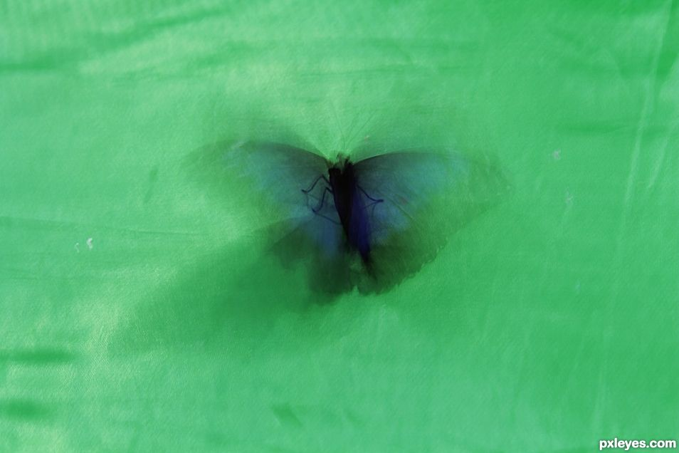 The flap of the butterfly wings