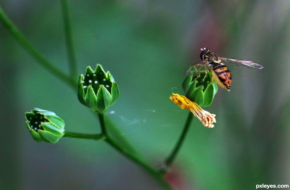 A Tiny Sweat Bee
