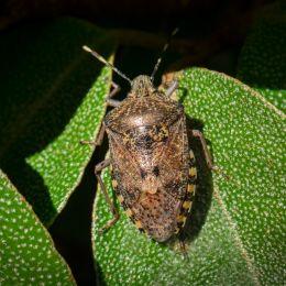 Twinkletwinklelittlebug