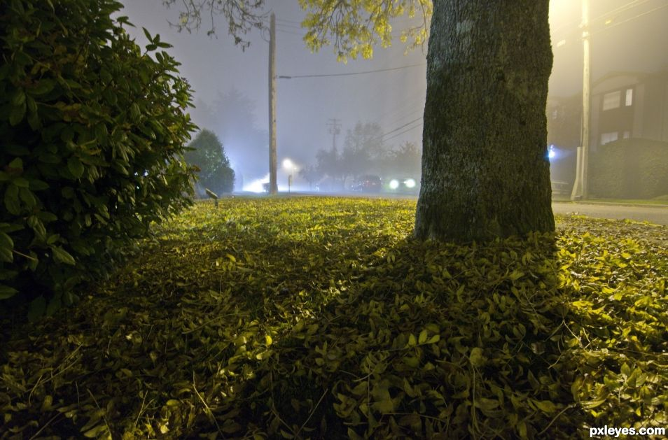 Fog in the Street