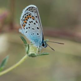 Elusivebutterfly